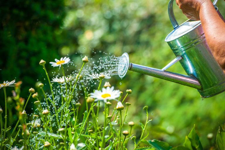 Garden watering service Sutton